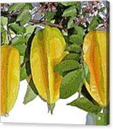 Carambolas Starfruit Three Up Acrylic Print by Olivia Novak