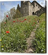 Carcassonne Poppies Acrylic Print by Robert Lacy