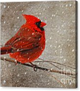 Cardinal In Snow Acrylic Print by Lois Bryan