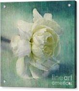 Carnation Acrylic Print by Priska Wettstein
