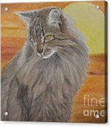 Cat And Sunset  Acrylic Print by Cybele Chaves