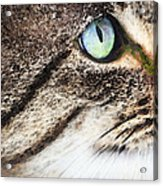 Cat Art - Looking For You Acrylic Print by Sharon Cummings