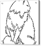 Cat Drawings 1 Acrylic Print by Gordon Punt