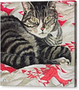 Cat On Quilt  Acrylic Print by Anne Robinson