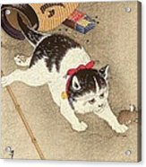 Cat Acrylic Print by Pg Reproductions