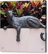 CAT Acrylic Print by Rob Hans