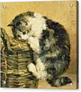 Cat With A Basket Acrylic Print by Charles Van Den Eycken