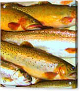Catch Of The Day - Painterly - V2 Acrylic Print by Wingsdomain Art and Photography
