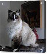 Cats 68 Acrylic Print by Joyce StJames