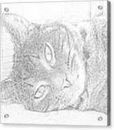 Cat's Eye Acrylic Print by J D Owen