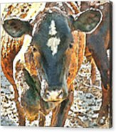 Cattle Round Up Acrylic Print by Artist and Photographer Laura Wrede