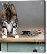 Caught In The Act Acrylic Print by Nailia Schwarz
