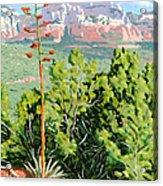 Century Plant - Sedona Acrylic Print by Steve Simon