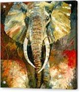 Charging African Elephant Acrylic Print by Christiaan Bekker