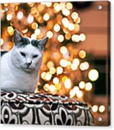 Charly And The Xmas Tree Acrylic Print by Edward Kreis