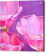 Cheers Acrylic Print by Irina Wardas