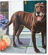 Chelsea At The Door Acrylic Print by Sandra Chase