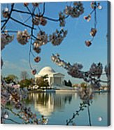 Cherry Blossoms 2013 - 039 Acrylic Print by Metro DC Photography