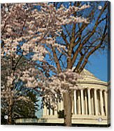 Cherry Blossoms 2013 - 048 Acrylic Print by Metro DC Photography