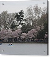 Cherry Blossoms - Washington Dc - 011317 Acrylic Print by DC Photographer