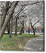 Cherry Blossoms - Washington Dc - 011360 Acrylic Print by DC Photographer