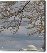 Cherry Blossoms With Jefferson Memorial - Washington Dc - 011313 Acrylic Print by DC Photographer