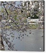 Cherry Blossoms With Jefferson Memorial - Washington Dc - 011336 Acrylic Print by DC Photographer