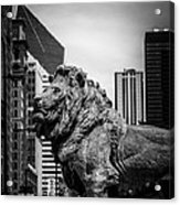 Chicago Lion Statues In Black And White Acrylic Print by Paul Velgos