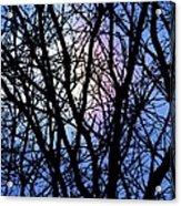 Chicago Winter Rainbow Acrylic Print by Todd Sherlock