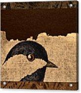 Chickadee Acrylic Print by Carol Leigh