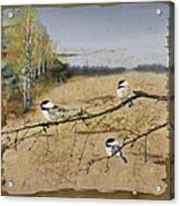 Chickadees And A Row Of Birch Trees Acrylic Print by Carolyn Doe