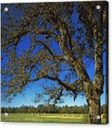 Chickamauga Battlefield Acrylic Print by Mountain Dreams