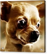 Chihuahua Dog - Electric Acrylic Print by Wingsdomain Art and Photography