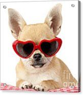 Chihuahua In Heart Sunglasses Dp813 Acrylic Print by Greg Cuddiford