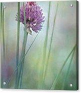 Chive Garden Acrylic Print by Priska Wettstein