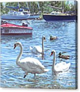 Christchurch Harbour Swans And Boats Acrylic Print by Martin Davey