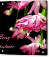 Christmas Cactus Greeting Card Acrylic Print by Carolyn Marshall