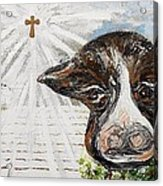 Christmas Cow - Oh To Have Been There... Acrylic Print by Eloise Schneider