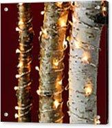 Christmas Lights On Birch Branches Acrylic Print by Elena Elisseeva