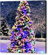 Christmas Tree In Snow Acrylic Print by Elena Elisseeva