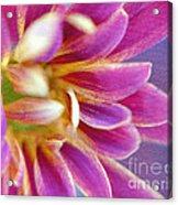 Chrysanthemum Painting Acrylic Print by Irina Wardas