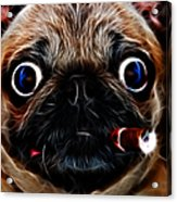 Cigar Puffing Pug - Electric Art Acrylic Print by Wingsdomain Art and Photography