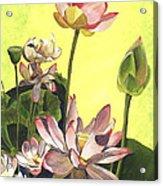 Citron Lotus 1 Acrylic Print by Debbie DeWitt
