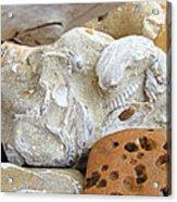Coastal Shell Fossil Art Prints Rocks Beach Acrylic Print by Baslee Troutman