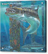 Cobia Strike In0024 Acrylic Print by Carey Chen