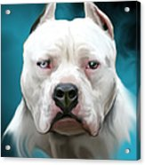 Cold As Ice- Pit Bull By Spano Acrylic Print by Michael Spano