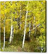 Colorado Autumn Acrylic Print by Baywest Imaging