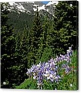 Colorado Classic Acrylic Print by George Tuffy
