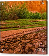 Colorful Streambed - Coyote Gulch - Utah Acrylic Print by Gary Whitton