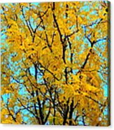 Colors Of Fall - Smatter Acrylic Print by Deborah  Crew-Johnson